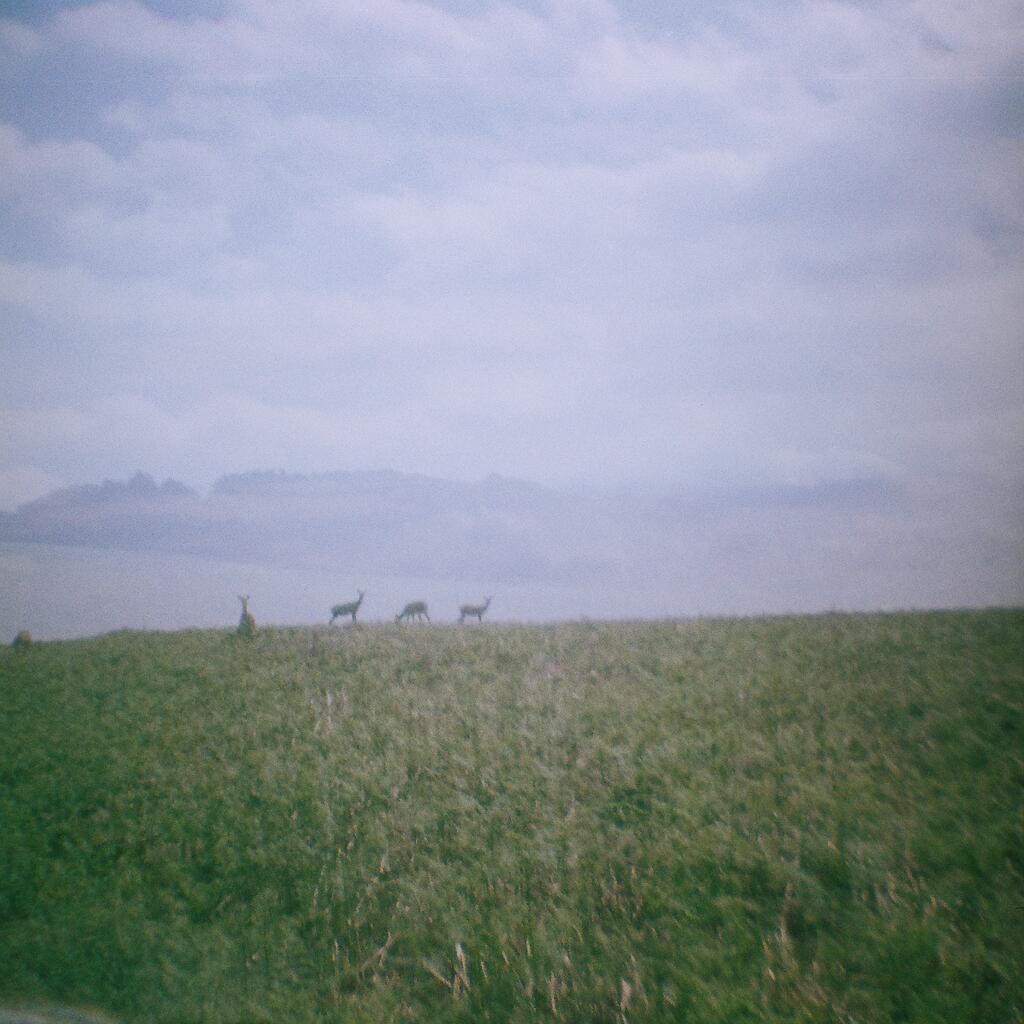 distant deers