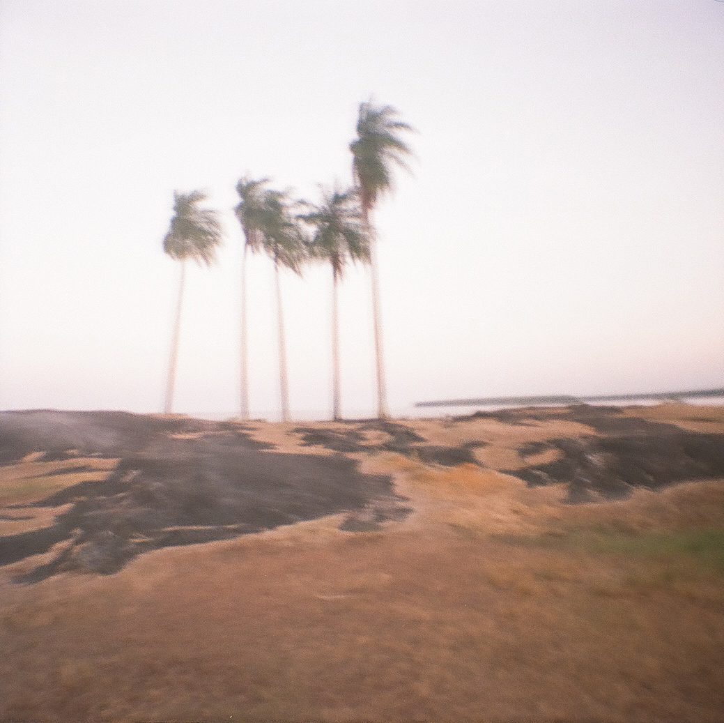 five palm trees